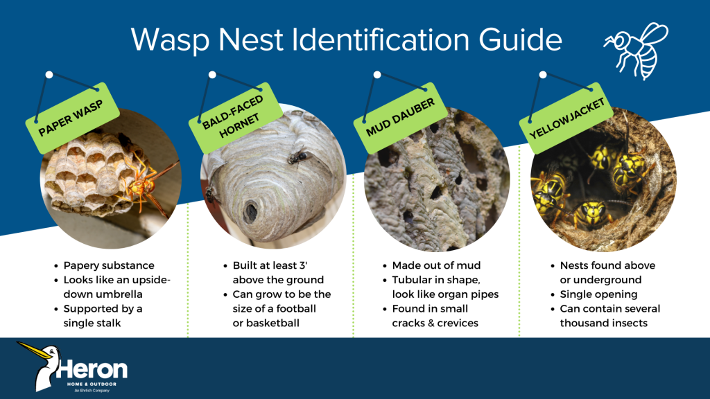Wasp nest identification in Central FL - Heron Home & Outdoor